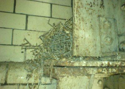 Nesting feral pigeons 3