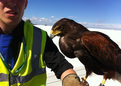 Effective bird control at work